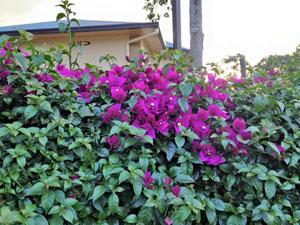 Flowers-at-IWE-Rwanda